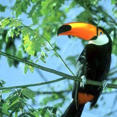 Toucan – Creation of habitats for native birds