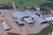 Darci Alves Las Casas Plant